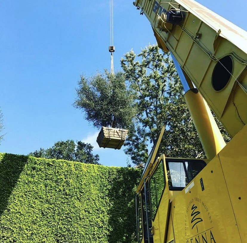 ontracting and tree moving, relocation and preservation