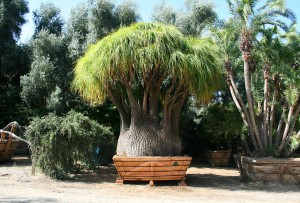Speicmen Trees